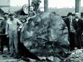 ongeveer 1938 (rechts naast boom Louis en Henri Koklenberg)